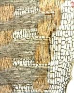 LEGUMINOSAE PAPILIONOIDEAE Hymenolobium petraeum