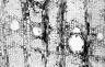 LEGUMINOSAE CAESALPINIOIDEAE Brandzeia filicifolia