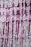 ROSACEAE Prunus grayana