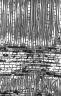 MALVACEAE BOMBACOIDEAE Gyranthera dariensis