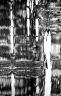 MALVACEAE GREWIOIDEAE Colona floribunda