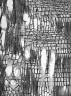STEMONURACEAE Stemonurus malaccacensis