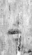 ELAEOCARPACEAE Sericolea pullei