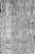 LEGUMINOSAE MIMOSOIDEAE Albizia anthelmintica