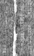 LEGUMINOSAE PAPILIONOIDEAE Willardia schiedeana