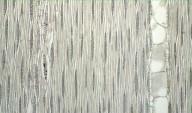 LEGUMINOSAE MIMOSOIDEAE Parkia bicolor