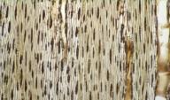 LEGUMINOSAE MIMOSOIDEAE Cojoba arborea