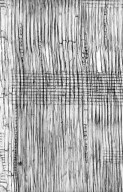 LEGUMINOSAE MIMOSOIDEAE Archidendron microcarpum