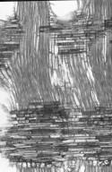 DIPTEROCARPACEAE Dryobalanops oblongifolia