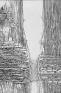 DIPTEROCARPACEAE Parashorea smythiesii