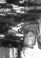 LECYTHIDACEAE Cariniana pyriformis