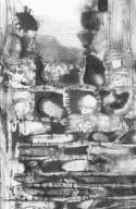 MALPIGHIACEAE Byrsonima spicata