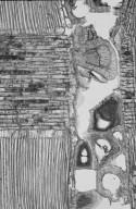 MORACEAE Brosimum rubescens