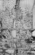 SAPOTACEAE Autranella congolensis