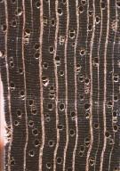 ANNONACEAE Guatteria schomburgkiana