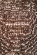 ERICACEAE Elliottia paniculata
