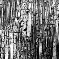 GEISSOLOMATACEAE Geissoloma marginata