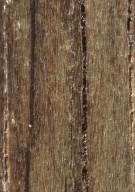 FAGACEAE Lithocarpus moluccus
