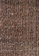 LECYTHIDACEAE Barringtonia acutangula