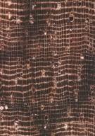 LECYTHIDACEAE Lecythis corrugata