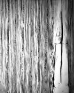 Piptostigma fasciculatum