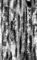 FAMILY? Fejej Group IV. Wood Type 8
