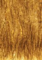 LEGUMINOSAE CAESALPINIOIDEAE Mimosoid Clade cf. Euacacioxylon sp