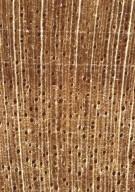 RUBIACEAE Rondeletia arborescens