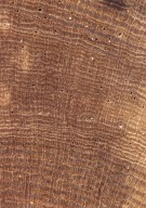 LEGUMINOSAE MIMOSOIDEAE Archidendron glabrum