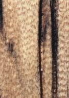 LEGUMINOSAE CAESALPINIOIDEAE Mimosoid Clade Cedrelinga cateniformis