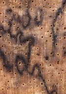 LEGUMINOSAE CAESALPINIOIDEAE Mimosoid Clade Macrosamanea kegelii