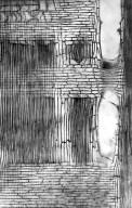 LEGUMINOSAE CAESALPINIOIDEAE Dimorphandra polyandra