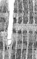 LECYTHIDACEAE Eschweilera alata