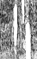 BIGNONIACEAE Handroanthus serratifolius