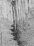 ICACINACEAE Emmotum fagifolium