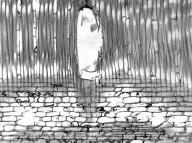 ANNONACEAE Annona muricata