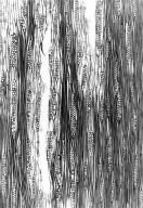 LEGUMINOSAE CAESALPINIOIDEAE Mimosoid Clade Entada louvelii