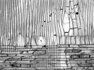LAURACEAE Litsea glutinosa