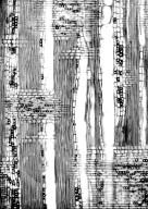 LOGANIACEAE Strychnos decussata