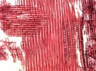LEGUMINOSAE MIMOSOIDEAE Parkia timoriana