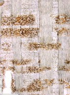 LEGUMINOSAE DETARIOIDEAE Anthonotha macrophylla